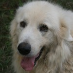 Bruno, 2001-2012